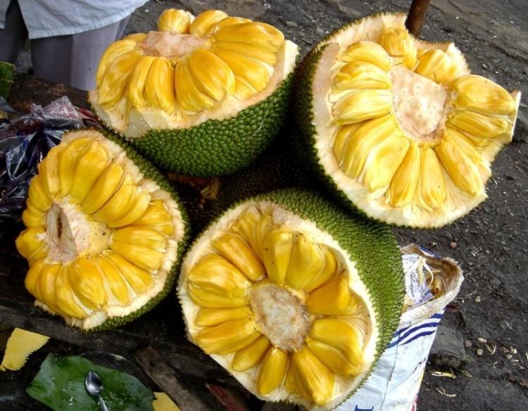 largest tree borne fruit